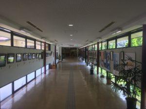 あせび温泉-廊下